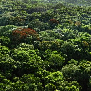 cool-earth-lubutu-project-congo-rainforest-canopy-2000px-copy-600x600
